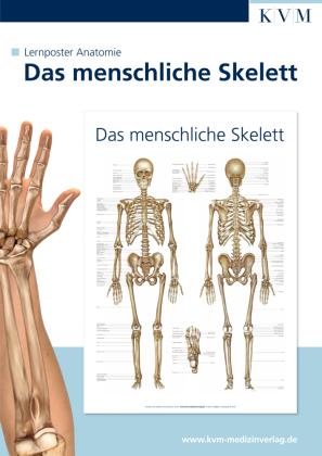 Das menschliche Skelett, 1 Poster