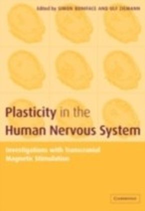 Plasticity in the Human Nervous System