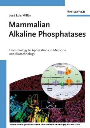 Mammalian Alkaline Phosphatases