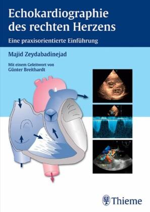 Echokardiographie des rechten Herzens