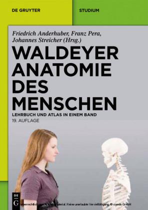 Waldeyer - Anatomie des Menschen