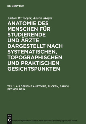 Allgemeine Anatomie, Rücken, Bauch, Becken, Bein