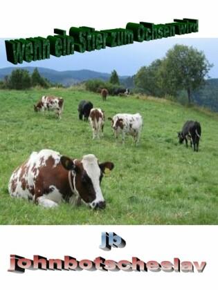 wenn ein Stier zum Ochsen wird