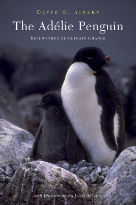 The Adélie Penguin