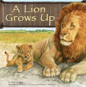 Lion Grows Up