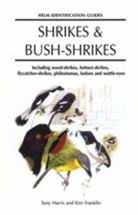 Shrikes and Bush-shrikes