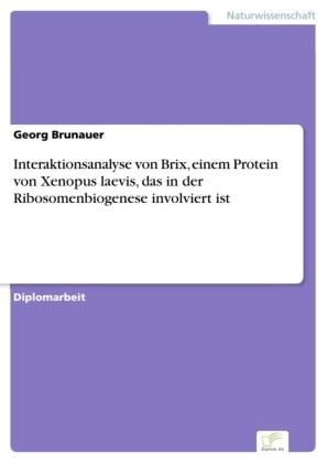 Interaktionsanalyse von Brix, einem Protein von Xenopus laevis, das in der Ribosomenbiogenese involviert ist