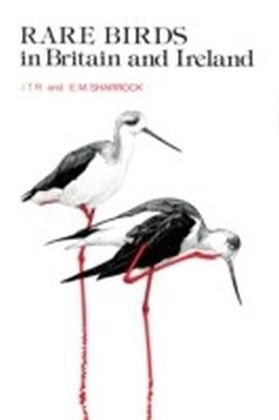 Rare Birds in Britain and Ireland