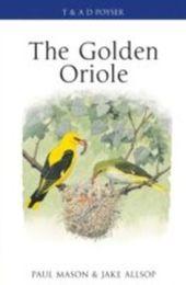 Golden Oriole
