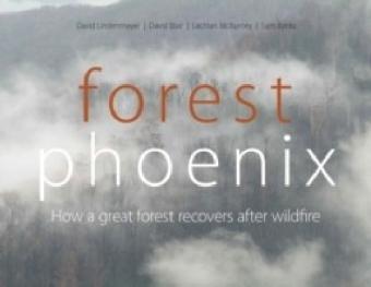 Forest Phoenix