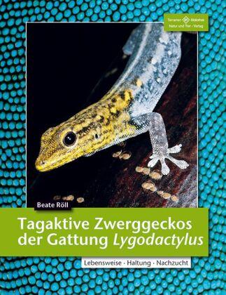 Tagaktive Zweggeckos der Gattung Lygodactylus