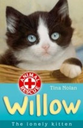 Willow the lonely kitten