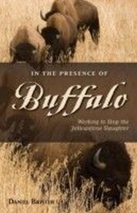 In the Presence of Buffalo