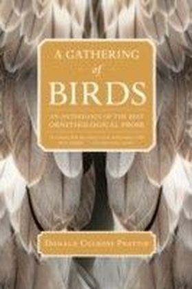 Gathering of Birds