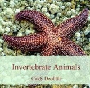 Invertebrate Animals