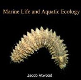 Marine Life and Aquatic Ecology