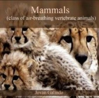 Mammals (class of air-breathing vertebrate animals)