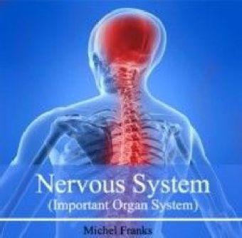 Nervous System (Important Organ System)