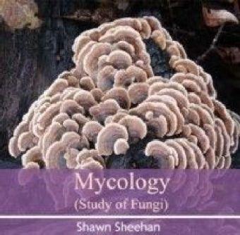 Mycology (Study of Fungi)