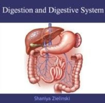 Digestion and Digestive System
