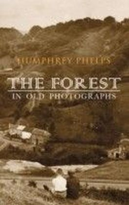 Forest In Old Photographs