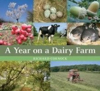 Year on a Dairy Farm