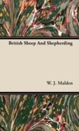 British Sheep And Shepherding