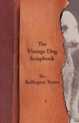 Vintage Dog Scrapbook - The Bedlington Terrier