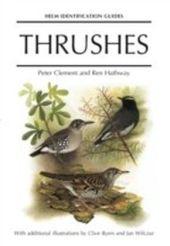 Thrushes