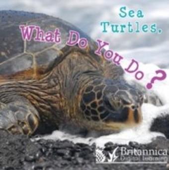 Sea Turtles, What Do You Do?