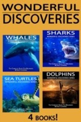 Sharks, Whales, Dolphins, Sea Turtles