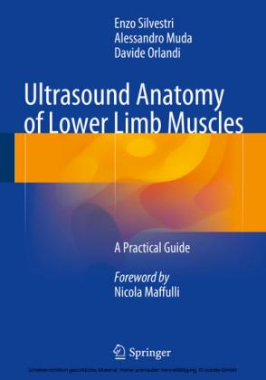 Ultrasound Anatomy of Lower Limb Muscles