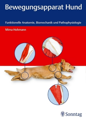 Bewegungsapparat Hund