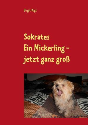 Sokrates Ein Mickerling - jetzt ganz groß