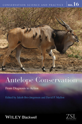 Antelope Conservation