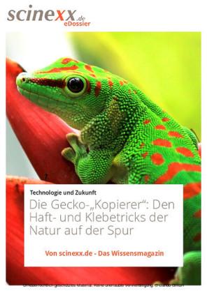 Die Gecko-'Kopierer'