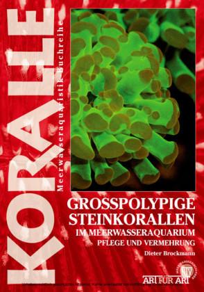 Grosspolypige Steinkorallen im Meerwasseraquarium