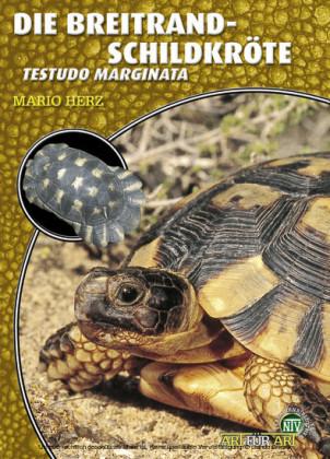 Die Breitrandschildkröte