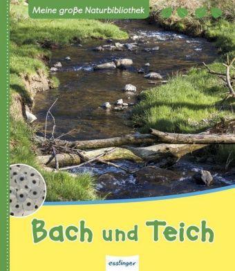 Bach und Teich