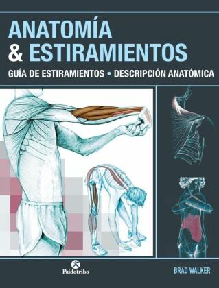 Anatomía & estiramientos