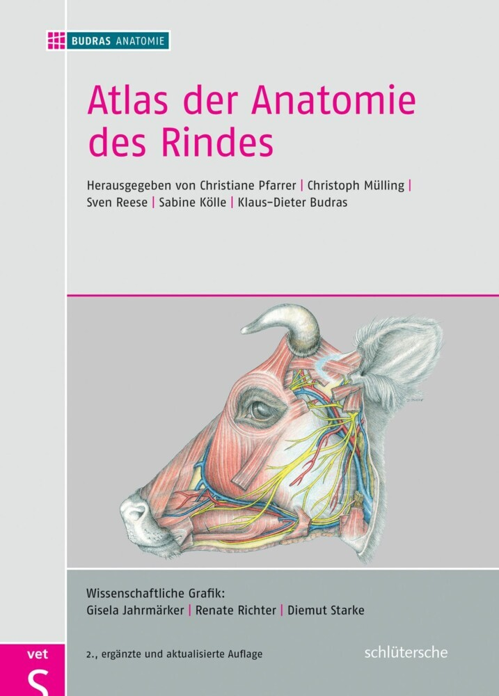 Atlas der Anatomie des Rindes (eBook) | HOFER life
