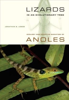 Lizards in an Evolutionary Tree