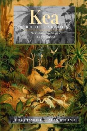 Kea, Bird of Paradox