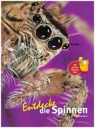 Entdecke die Spinnen