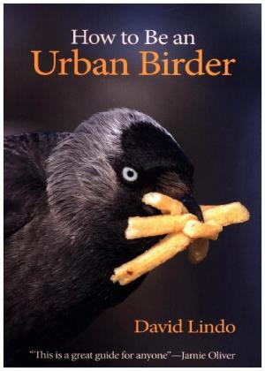 How to Be an Urban Birder