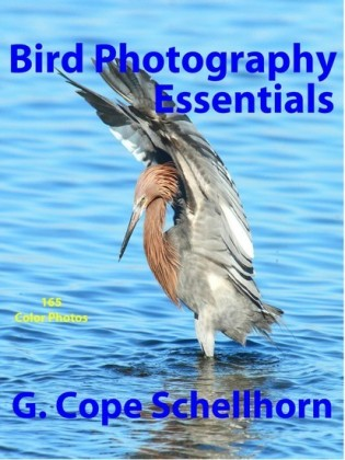 Bird Photography Essentials