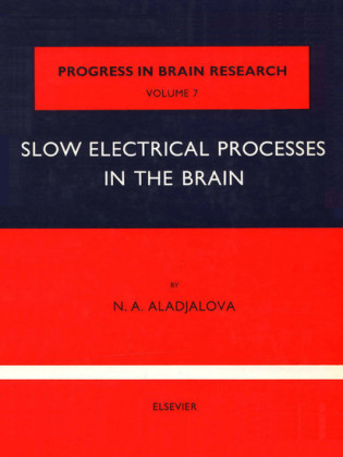 Slow Electrical Processes in the Brain