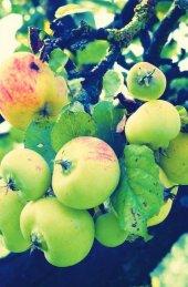 """Schreibwandel Notizbuch """"Äpfel"""""""
