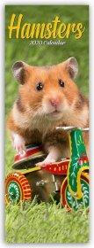 Hamsters - Hamster 2020