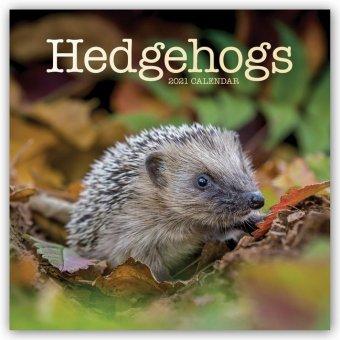 Hedgehogs - Igel 2021